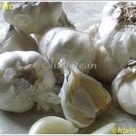 A Garlic a Day